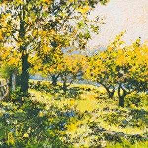 Orchard at Pentwyn