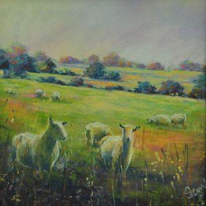 Sheep on the Banal Lane